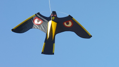 Cerf volant Rapace - Volgeur - Motif oei l brillant + Mat 4 m